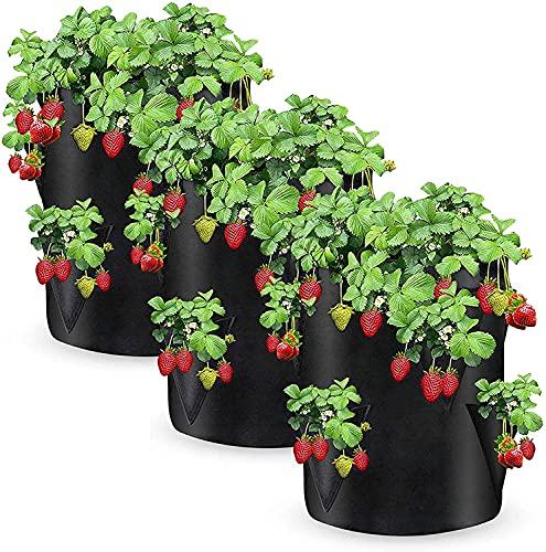 Wachstumstasche Blume Fots 3 Pack, 10 Gallone Umweltfreundliche Blume Pflanzer 8 Seitenwachsen Taschen Geizte Atmungsaktiv Wachsen Tasche Strawberry Haves