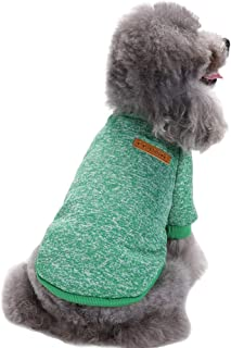 green dog sweater