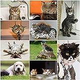 Chats drôles: Ensemble de 20 cartes postales avec chats rigolos et drôles (10 motifs x 2 pièces) pour collectionneurs et postcrossing par EDITION COLIBRI