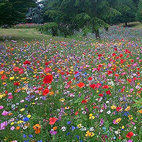 Buy 1 get 1 Free Packet UK Wild Flower Seed Mix Annual & Perennial Meadow Plants 10-20 sqare metres...