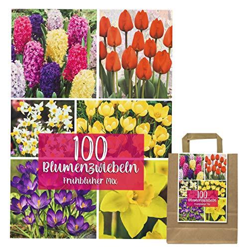 100 Blumenzwiebeln in Geschenkverpackung - Zwiebeln, Knollen verschiedener winterharter Pflanzen für Garten und Balkon - bunt, mehrjährig, für Topf und Beet (100 Blumenzwiebel mix)