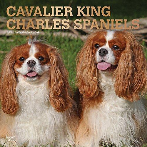 Cavalier King Charles Spaniels 2019 - 18-Monatskalender mit freier DogDays-App (Wall-Kalender)