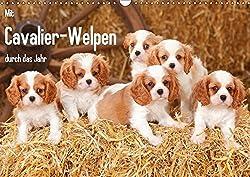 Mit Cavalier-Welpen durch das Jahr (Wandkalender 2017 DIN A3 quer): Cavalier King Charles Spaniel-Welpen in allen Farbschlaegen begleiten Sie durchs Jahr. (Monatskalender, 14 Seiten )[Petra Wegner]