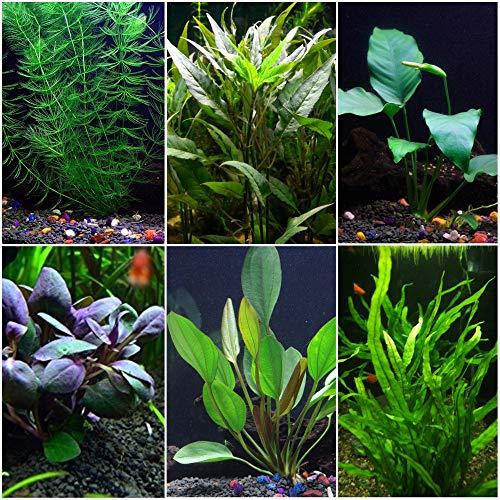 Goldfish Aquarium Plant Bundle