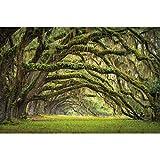 GREAT ART Mural De Pared – Avenida De Roble – Bosque Naturaleza Paisaje Verano Bosque Musgo Misticismo Quercus Cuento De Hadas Bosque Parque Ramas Foto Tapiz Y Decoración (336 x 238 cm)
