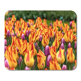 Mouse Pad Striped Tulips Flowerbed of Synadea King and Giuseppe Verdi Mousepad for Notebooks,Desktop Computers Mouse Mats,...