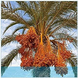 Best bonsai date palm Reviews