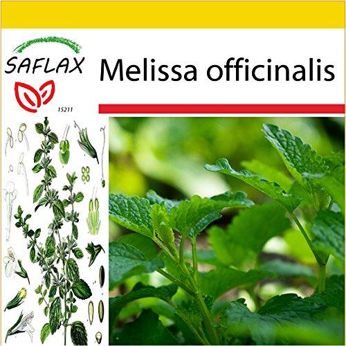 SAFLAX - Set per la coltivazione - Erba limoncina - 150 semi - Melissa officinalis