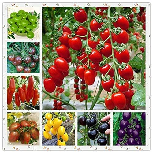 Pinkdose 500pcs multicolore tomates fraîches plantes succulentes organiques non-OGM fruits savoureux légumes anti-âge Planta/Plante pour la maison jardin: 100 pcs -2