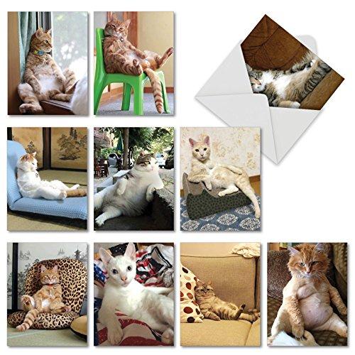 The Best Card Company - 10 All Occasion Blank Cat Cards (4 x 5.12 Inch) - Cute Assorted Bulk Card Set - Sitting Pretty Kitties M4613OCB-B1x10