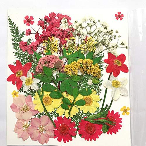 Nombre del producto: flor seca pura natural. Material: pétalos secos. Especificaciones: flores de primavera (alrededor de 42 flores), mundo colorido (alrededor de 38 flores), jardín colorido (alrededor de 35 flores), azul fresco (alrededor de 30 flor...