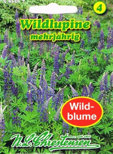 Wildlupine 'Lupinus perennis' Lupine mehrjährig Streusaat für Wiesen Staude Wildblumen