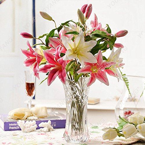 100 pcs Bonsai Lily Graines d'intérieur Plantes vivaces Lily Flower Seed Pure White Accueil Jardin Fleurs Plantes SEMENTES Livraison gratuite Blanc