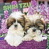 Shih Tzu Puppies 2022 12 x 12 pulgadas calendario mensual cuadrado de pared, animal pequeño perro ra...