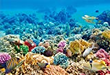 Cassisy 3x2m Vinilo Submarino Telon de Fondo Vista de Especies Marinas Arrecife de Coral Banco Pez Tropical Fondos para Fotografia Party Infantil Photo Studio Props Photo Booth