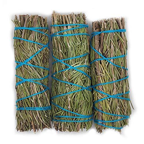 Farbenwald Rosmarin, 3 Bündel~11cm, aus Kalifornien, Räucherware, Sonnenkraut, Rosemary, Smudge Sticks