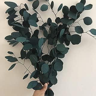 Belle Fleur Preserved Eucalyptus Branches 140g, Dried Eucalyptus Leaves for Making Garland/Wreath Flower Arrangement Wedding Home Decor(Green)