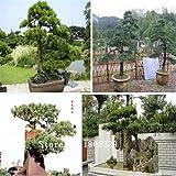 semillas de bonsái 50 paquetes de semillas del árbol Bonsai SEMILLAS Pinus nigra, Fagus sylvatica, palmatum de Acer, Acer Buergerianum, bricolaje