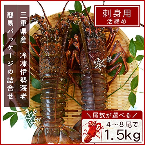 三重県産 伊勢海老 詰合せ 8尾で約1.5kg 刺身用 瞬間 冷凍 伊勢エビ