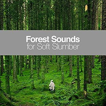 Forest Sounds for Soft Slumber