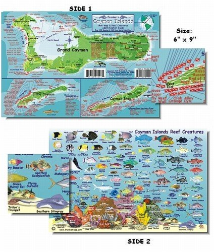 Cozumel Fish and Creature Guide Franko Laminated Maps - Fish ID and Maps Franko's Maps about 9' x 6' Snorkel Snorkeling Travel Scuba Dive Diving Diver