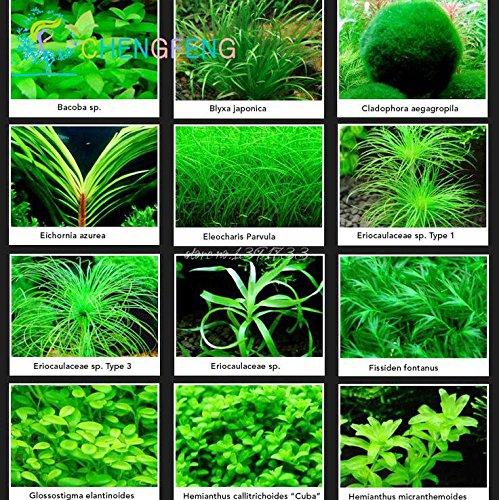 Promozione! 200seeds 12 generi misti Semi acquario Fish Tank Erba coperta bellissimo orologio Acquatico piante da seme