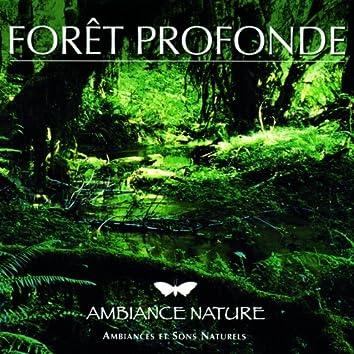 Ambiance Nature  Foret Profonde