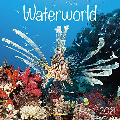 Waterworld 2021: Broschürenkalender mit Ferienterminen. Fische und Unterwasserwelt. 30 x 30 cm