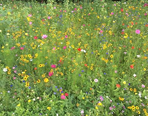 Veitshöchheimer Bienenweide Sommerblumenmischung Rot–/Gelbtöne - Bienenwiese Blumenwiese für ca. 40-50m², ca 50 Gramm