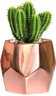 GeLive Hexagon Rose Gold Succulent Planter, Ceramic Geometric Cactus Plant Pot, Modern Window Box with Drainage Hole, Home Accent Décor (Hexagon Planter)