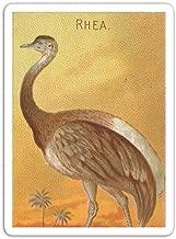 gordonstore Sticker Creature Animal Tropical Birds Vintage Illustration Animals Fauna (3