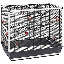 vogelk fig kaufen infos news empfehlungen. Black Bedroom Furniture Sets. Home Design Ideas