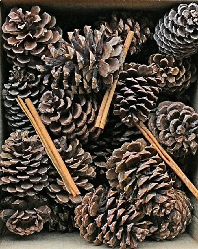 定常背景ディレクトリCinnamon Scented Pine Cones with Cinnamon Sticks 30?perボックスブラウン(ナチュラル) Case of 180 pine cones