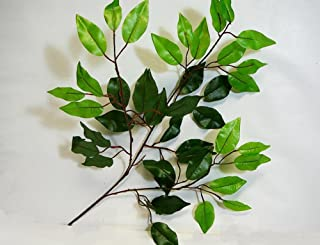 Ladybug Wreaths Certified Artificial Silk Ficus Leaf Branches, Bundle of 6 Stems, Darker Green & Lighter Green Growth on end.