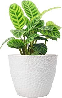 Best Outdoor Indoor Planters Flower Pots - 9.4 Inch Planter Pot Containers, Plant Pots, White, Honeycomb Review