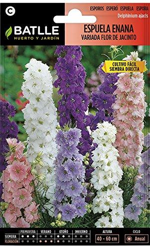 Semillas de Flores - Espuela Flor de Jacinto enana variada - Batlle