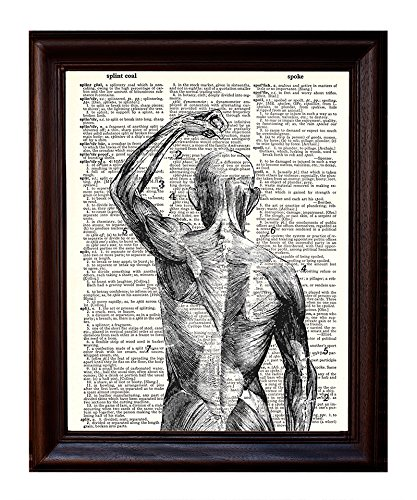 Close up of The Superficial Muscles - Printed on Upcycled Vintage Dictionary Paper - 8x10.5 Anatomy Art Poster/Print