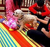 BalajeesUSA 2 Stück 152 x 20188 wendbare Teppiche für drinnen und draußen, aus Kunststoff, Stroh-Teppich, Campingmatte, Strandmatte, Terrassenteppich, Großhandelspreis - 2