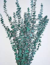 Preserved Eucalyptus Branches for sale - Green Single Bunch - Green