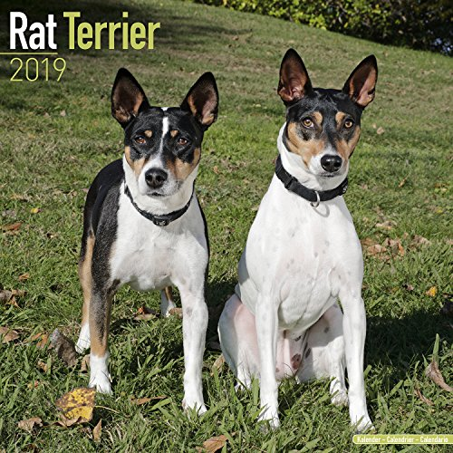 Rat Terrier Calendar - Dog Breed Calendars - 2018 - 2019 Wall Calendars - 16 Month by Avonside