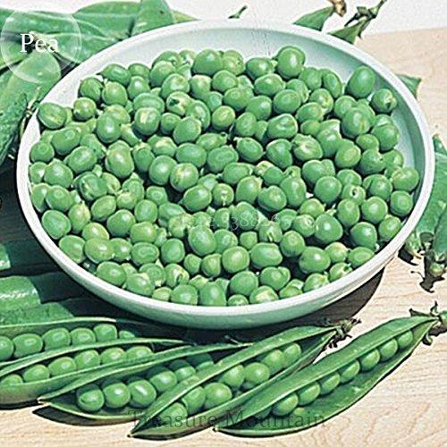 Heirloom Organic Green Arrow Pea Vegetable Seeds, Paquet professionnel, 500 graines/Pack, excellent Sweet Pea Garden