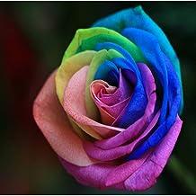 Vista 100 Pcs Rainbow Rose Graines De Fleurs pour Les Familles Guesthouses DIY Coloré Usine Maison Jardin Bonsaï Rare Rainbow Rose Graines