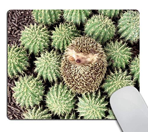 Mouse Pad Cuscom Tiere Pflanzen Igel Kaktus Dornen Büro Gedruckte Tastatur Personalisierte Rutschfeste Mausmatte Sonderschule Schreibtisch Gummi Langlebig 25X30Cm Mousepad Compute