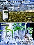 Zoom IMG-2 lucky bamboo fertilizzante liquido nutrimento
