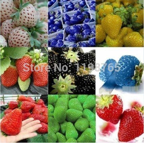100pcs 2016 10 Nouveaux rares Couleurs Super Sweet Strawberry géant Graines fleurs en pot Berry graines graines de fruits noirs