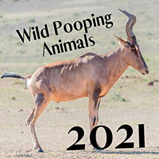 2021 Wild Pooping Animals: Funny Gift Wall Calendar For Animals Lovers !!! To Office Or For Friends !!!