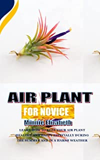 AIR PLANT FOR NOVICE: Learn how to keep your air plant healthy and happy especially during the summer and in a harsh weather