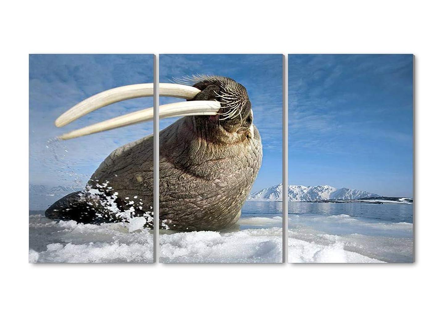 四分円クリエイティブパール50x70CM X3枚 アートパネル 完成品( セイウチ北極海 ) モダン 特大 写真 アートフレーム 絵画 壁飾り キャンバス絵画 パネル装飾画(木枠付きの完成品)