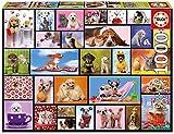 Educa - Momentos Compartidos Animales Puzzle, 1000 Piezas, Multicolor (15518)