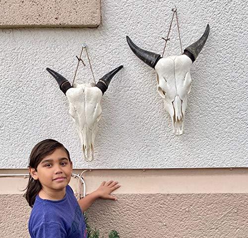 2 cráneos de vaca, decoración de hueso de la India, 2 piezas, calaveras, decoración original Little Big
